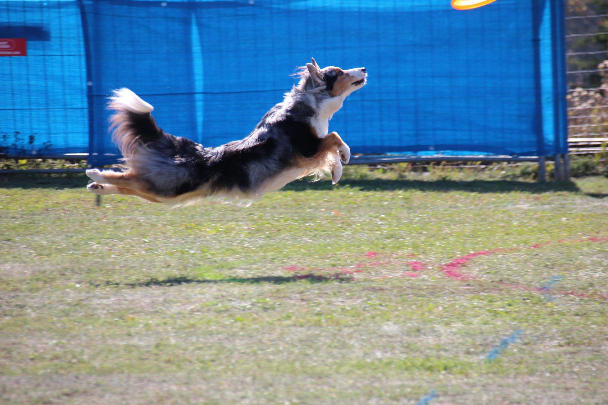 Dogfrisbee Turnier in Mistelbach 2019. Qualifikation für die Österreichischen Meisterschaften.